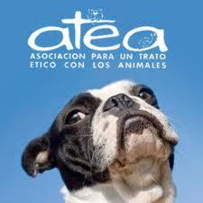ATEA muestra su disconformidad con la nueva ordenanza de animales aprobada por el Ayuntamiento de Gasteiz