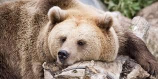 """""""La siesta del oso"""", Rosana nuestra corresponsal en Rusia"""