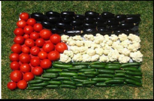 UZTARO Kooperatiba: Resistencia Palestina y Soberanía Alimentaria.