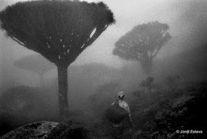 Caminante entre la niebla copia