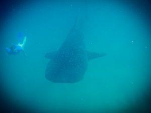 Diving-Cray-Fish-