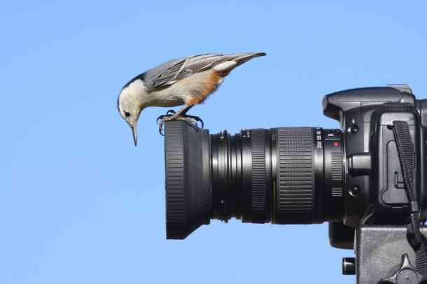 Birding Travels