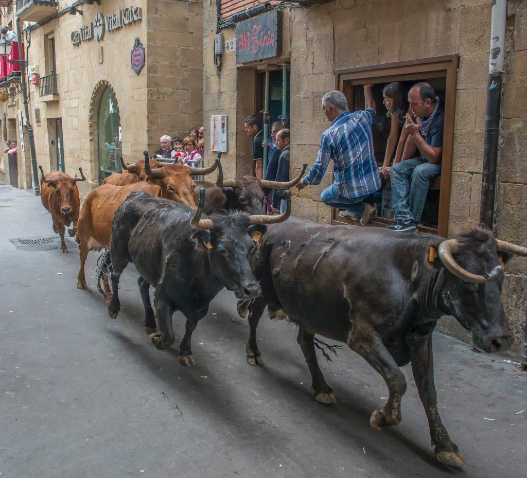 """Ander Bezares (Errioxa): """"No es el primer año que muere una vaca en encierros en Laguardia"""""""