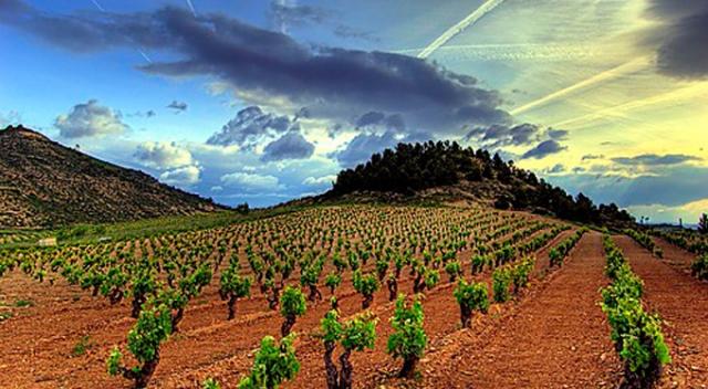 """Esti Besa (ardogilea): """"Rioja ardoaren sormarkak ez gaituela ordezkatzen sentitzen dugu"""""""