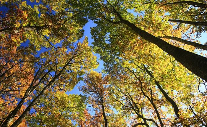 Nuestros bosques, nuestro futuro