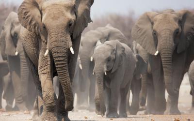 Mujeres en la ciencia | De los susurros de los elefantes a la investigación de la dislexia