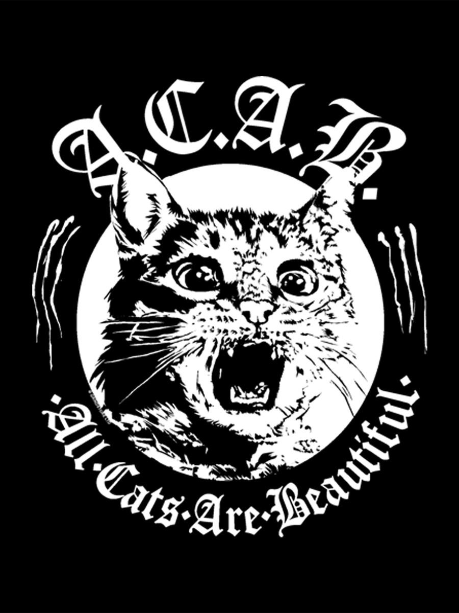 No Hay Pasado 1 x 10   (Monográfico) La belleza de los gatos