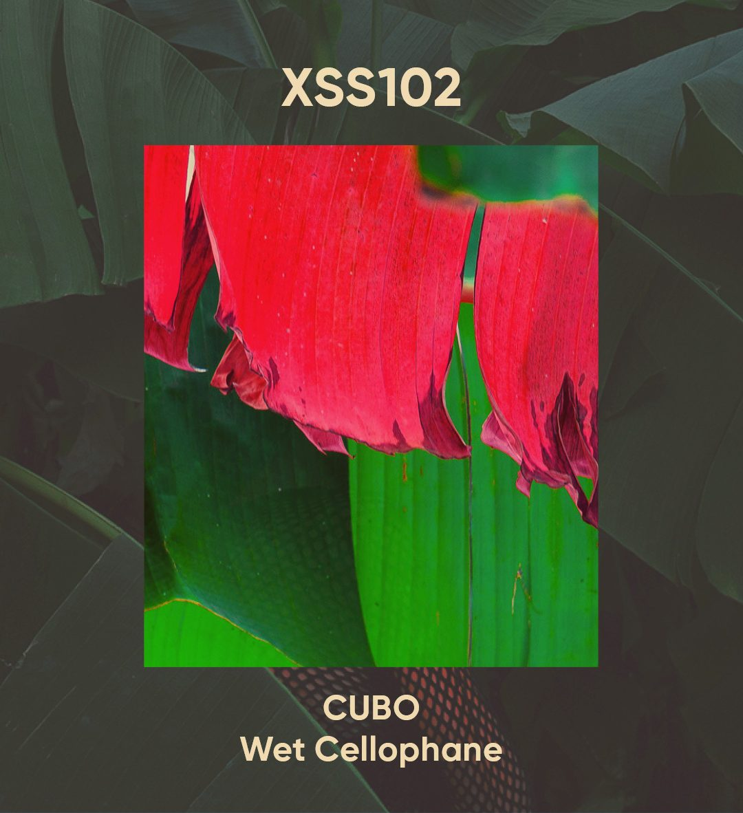 XSS102 | Cubo | Wet Cellophane