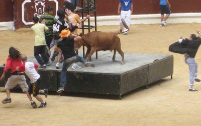 Espectáculos ilegales de vaquillas en el Iradier Arena