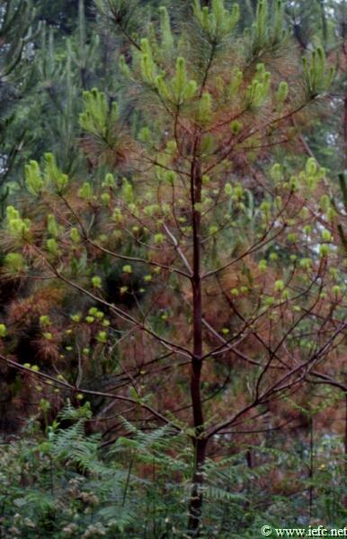 """Markel Arriolabengoa: """"Estamos ante la oportunidad de desarrollar un modelo de gestión forestal diferente"""""""