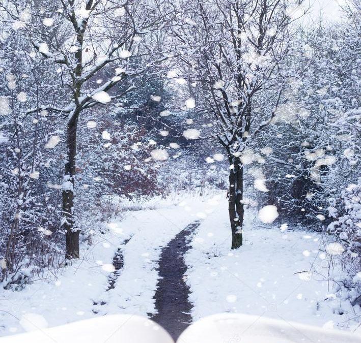 Literatura | Tres propuestas para este invierno