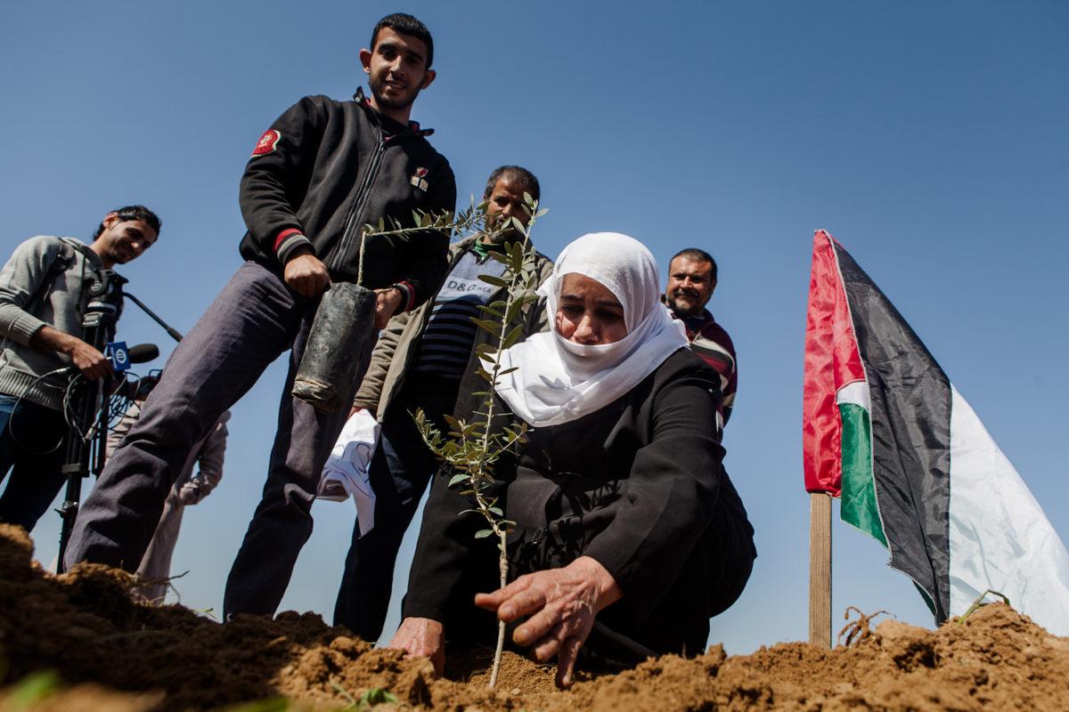 """""""El  olivo  es  un  símbolo  de  resistencia,  cada  palmo  de  olivar  que  se  abandona  es  un  pedazo  de  tierra  más  que  invaden  los  colonos"""""""