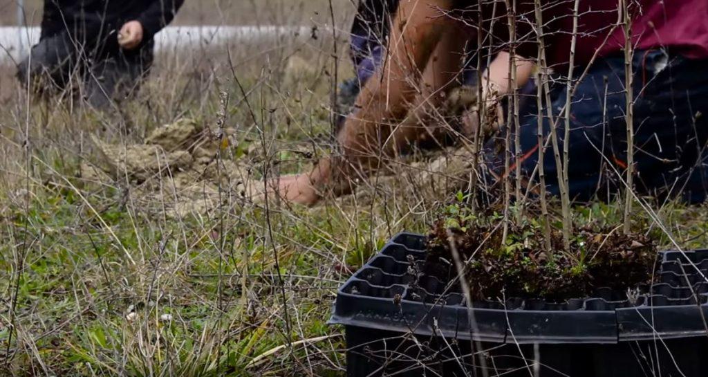 Errekaleor se okupa de los terrenos sin uso de la Caja Vital e inmobiliarias para construir su propio bosque