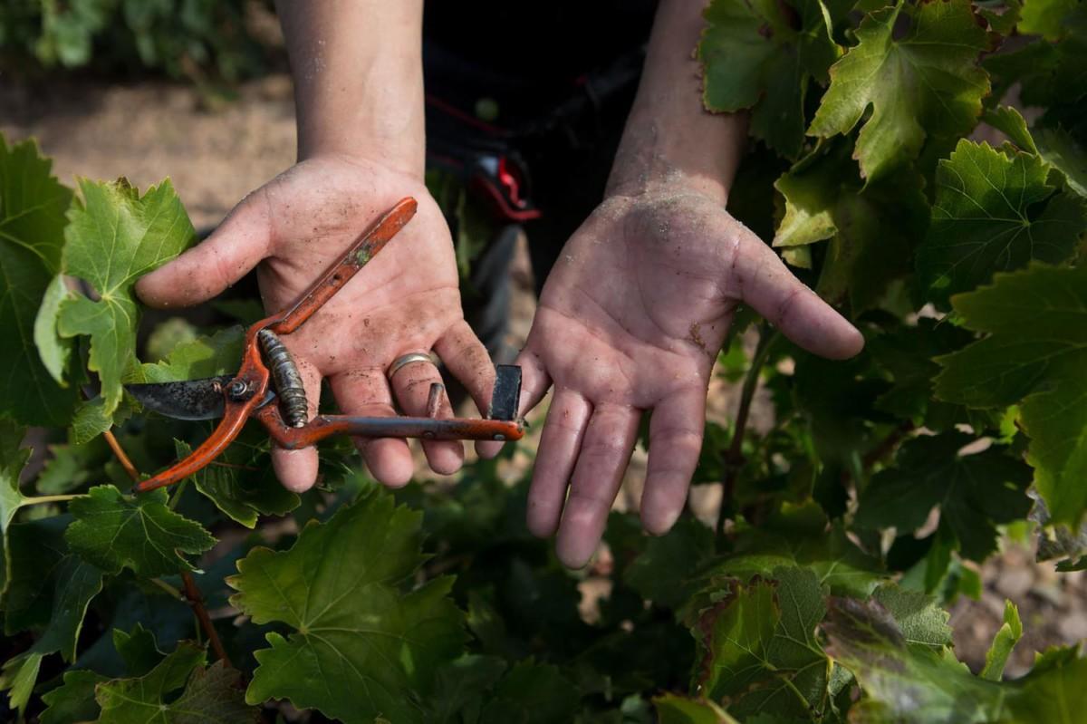 """Subidas salariales """"de miseria e insuficientes"""" en el sector vínicola"""