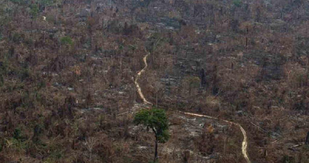 Amazonía   «Se tratan las cosas como si estuvieran desconectadas entre ellas y hay que tener esa perspectiva global, identificando como problema de base al sistema capitalista»