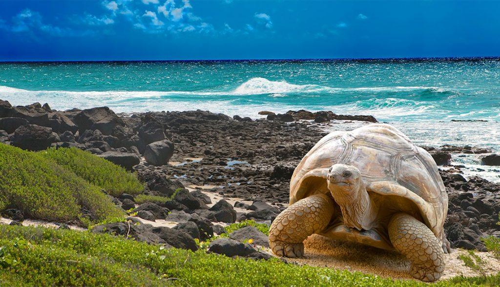 Kasakatxan: 5.14: Errumaniara txirrinduan txakurra lagun / Galapago Uharteak, dordoken paradisua