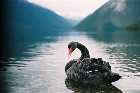 ¡Qué Mundo! | Coronavirus y sus implicaciones geopolíticas, aquí está el cisne negro