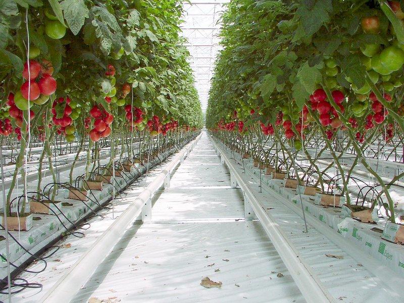 """Exigen que se paralice la construcción de unos invernaderos dedicados al cultivo de """"tomate frankenstein"""" en el polígono de Tuesta"""
