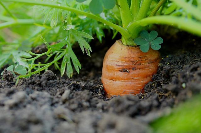 Agroecología | «Hay que ayudar a esos pequeños productores que apuestan más por la sostenibilidad, por la diversidad y por la calidad»