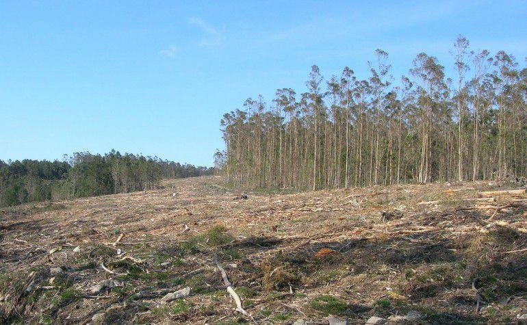 Nace en Amurrio una iniciativa ciudadana para luchar contra los problemas medioambientales originados por los monocultivos de eucalipto