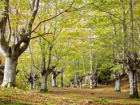 """Markel Arriolabengoa (Errez Kooperatiba y Tantai Baso Kooperatiba): """"El actual modelo forestal responde a un modelo agrario que entiende las dinámicas forestales de manera lineal"""""""