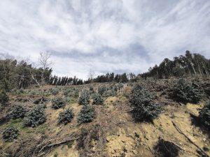 """""""La propiedad privada del monte puede tener su uso sobre ello, pero los valores ambientales que produce el monte son de todas"""""""